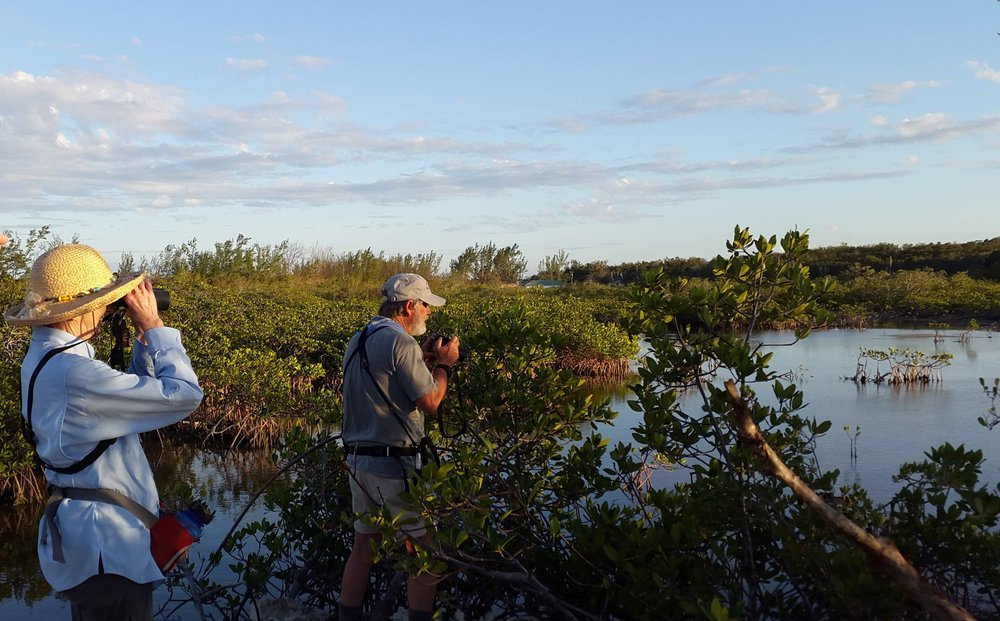 Looking for Clapper Rails near Small Hope Bay