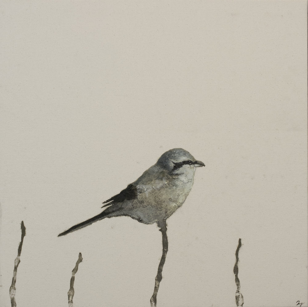 Earth Birds, Northern Shrike