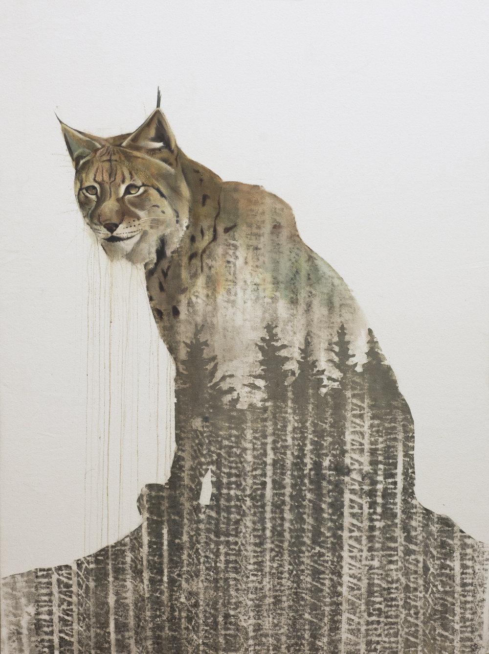 """Abooksigun, Algonquin """"wildcat"""""""