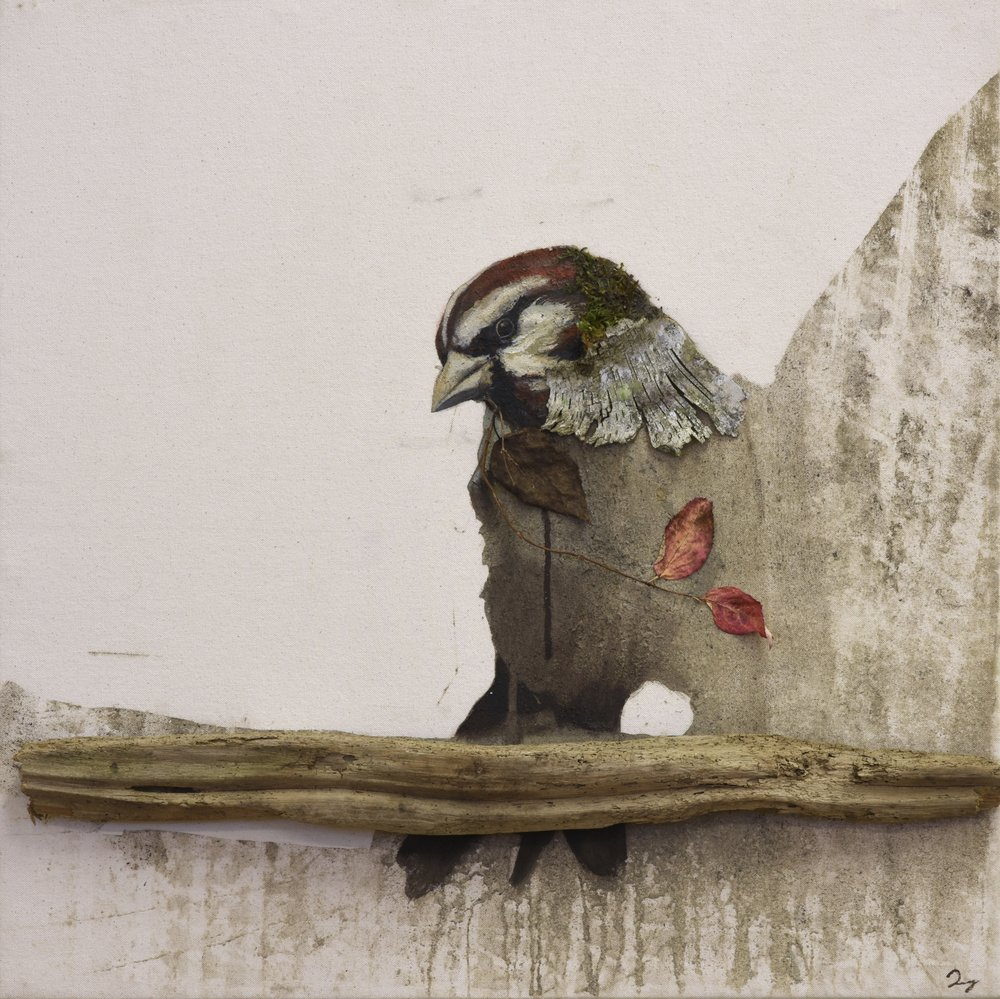Earth birds, Sparrows