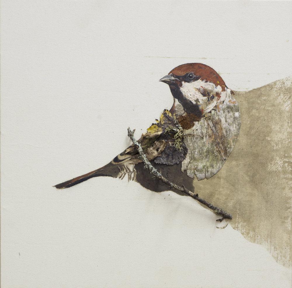 Earth birds, Sparrow