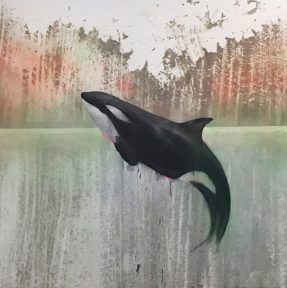 Rainbow Orca