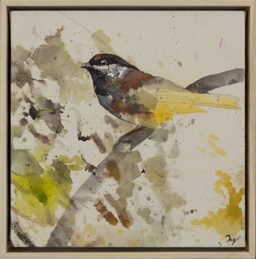 Drop Cloth Bird 2