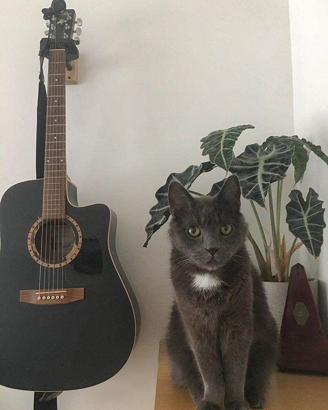 Iggy I can't play, I have to practice! . . . . . . . #music#practice#cats