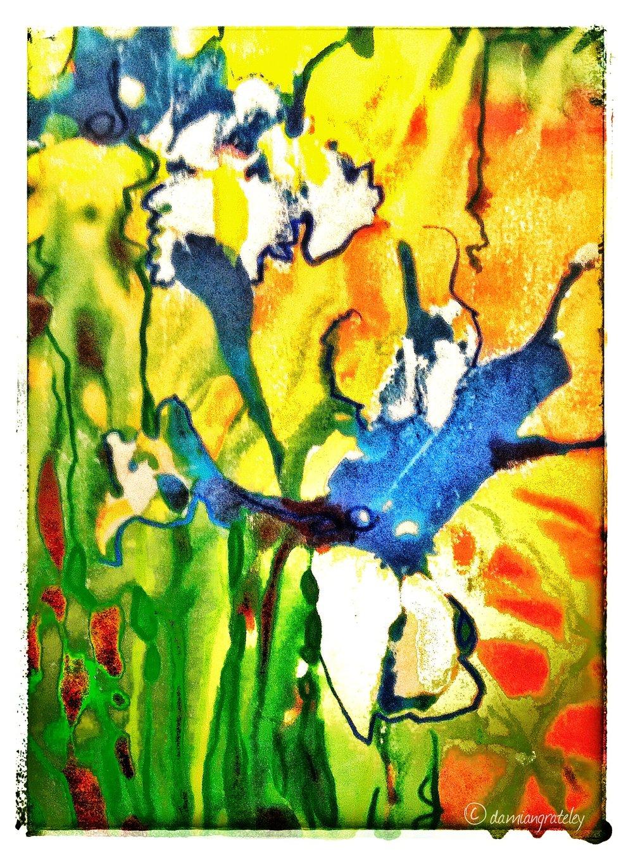 Iris (015)