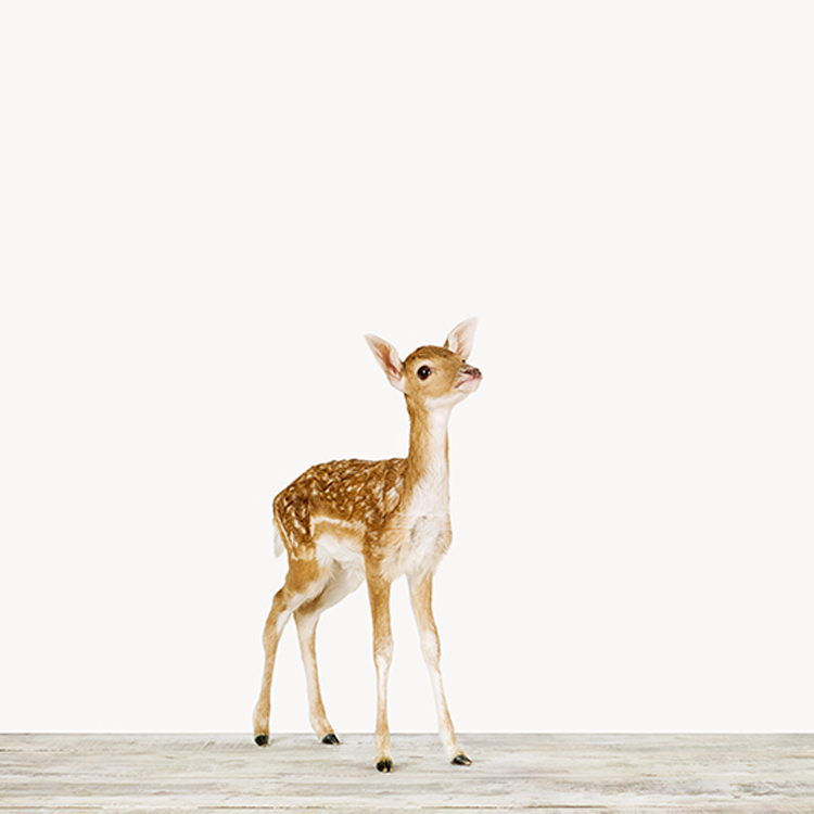 animalprintshop.jpg