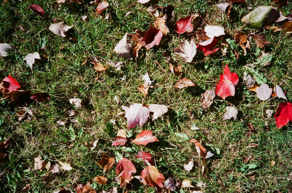Photo of Autumn leaves in Cathedral Park, Portland, OR