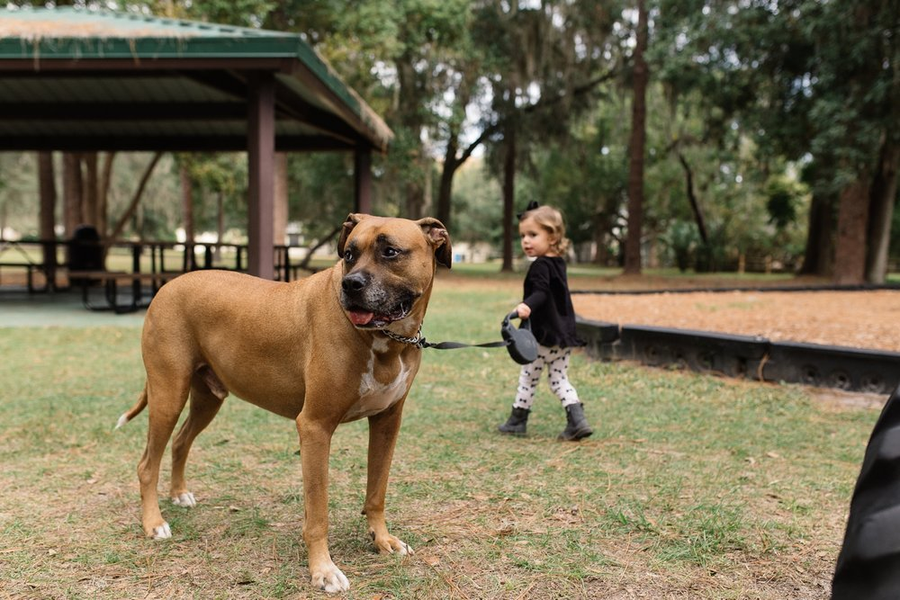 Toddler Walks Dog in Orlando Family Documentary Photographer.jpg
