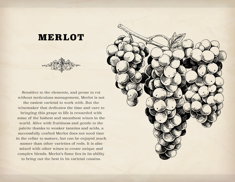 Mmmm... Merlot... Oh, sorry. Merlot is the second unlockable grape varietal in Terroir, and will require a bit more management in order to get the best results.