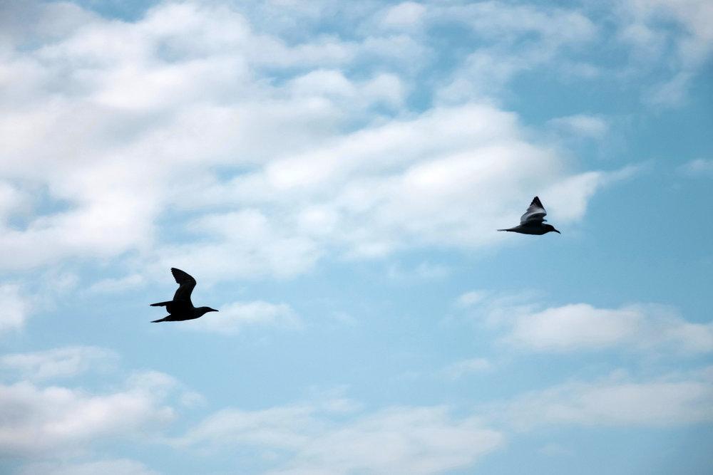 2 aves.jpg