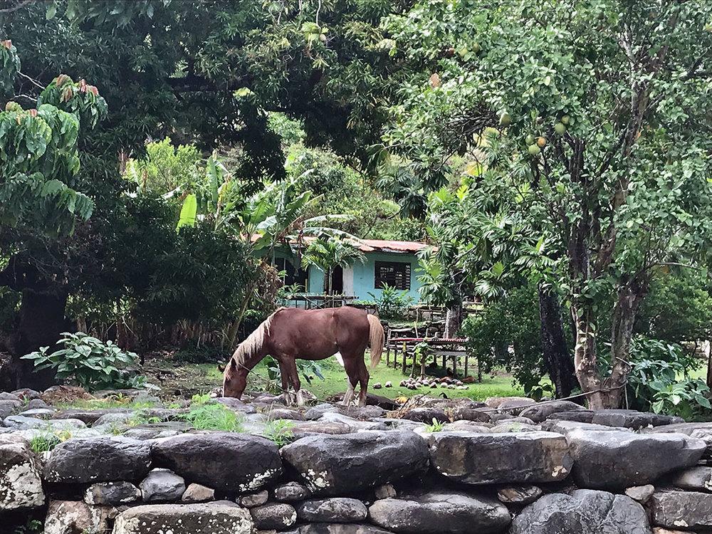 casita y horse baja.jpg