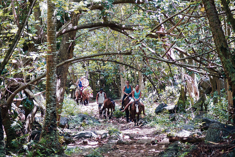 grupo caballos.jpg
