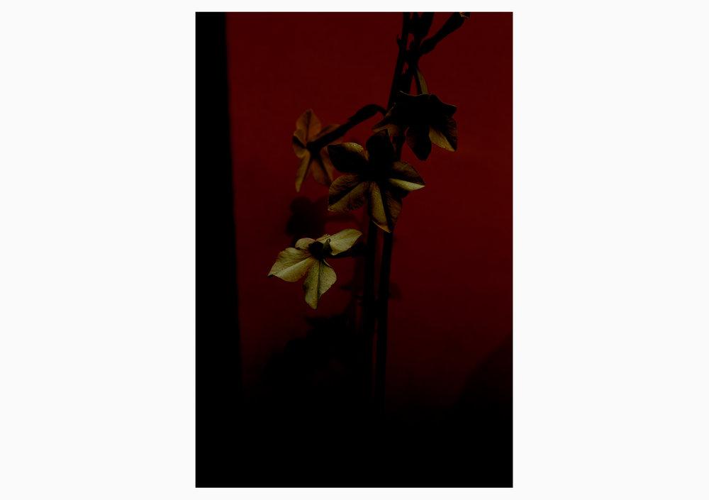 'Flowers'