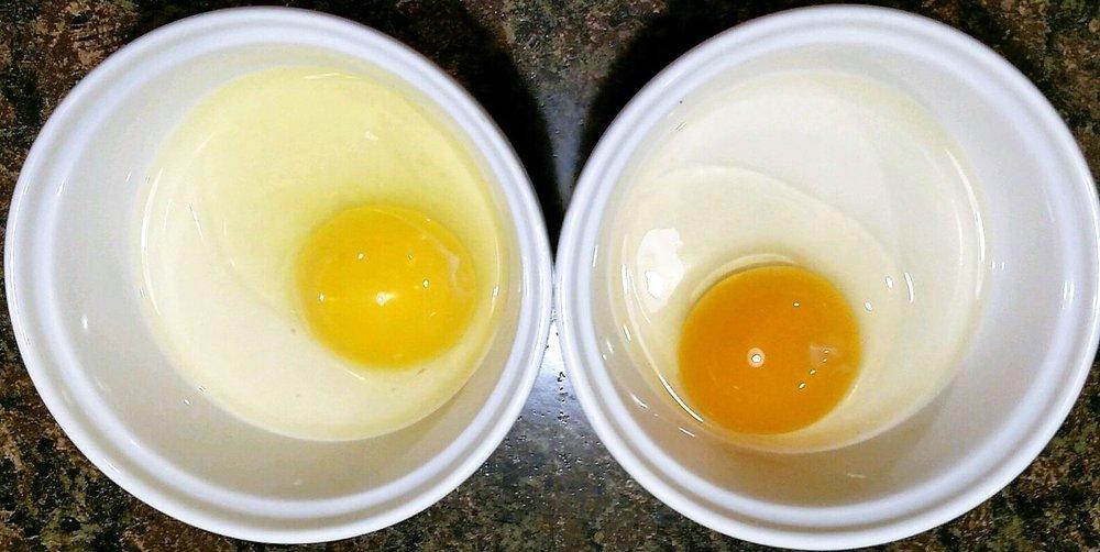 egg yolks.jpg
