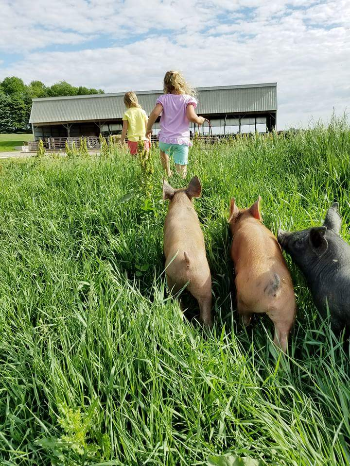 girls pigs.jpg