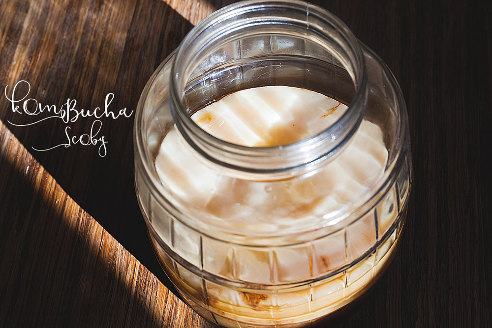 *you will need to find a nice big glass (wide mouth) jar that will fit your SCOBY and all the liquid.  I found mine at Canadian Tire, but I have seen other great ones at Bargain Shops and second hand stores too.