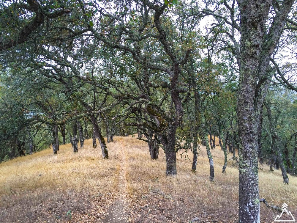 Henry W. Coe State Park