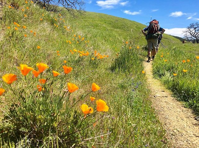 New blog post! Our Coit Lake Trek is up on the blog. Check it out, it's featured on our front page (link in bio). . . #firtop #firtophikes #makeittothetop #happyhiking #henrycoestatepark #henrycoe #coitlake #californiapoppy #superbloom #californiastateparks #backpacking #hiking #nature #wilderness #california
