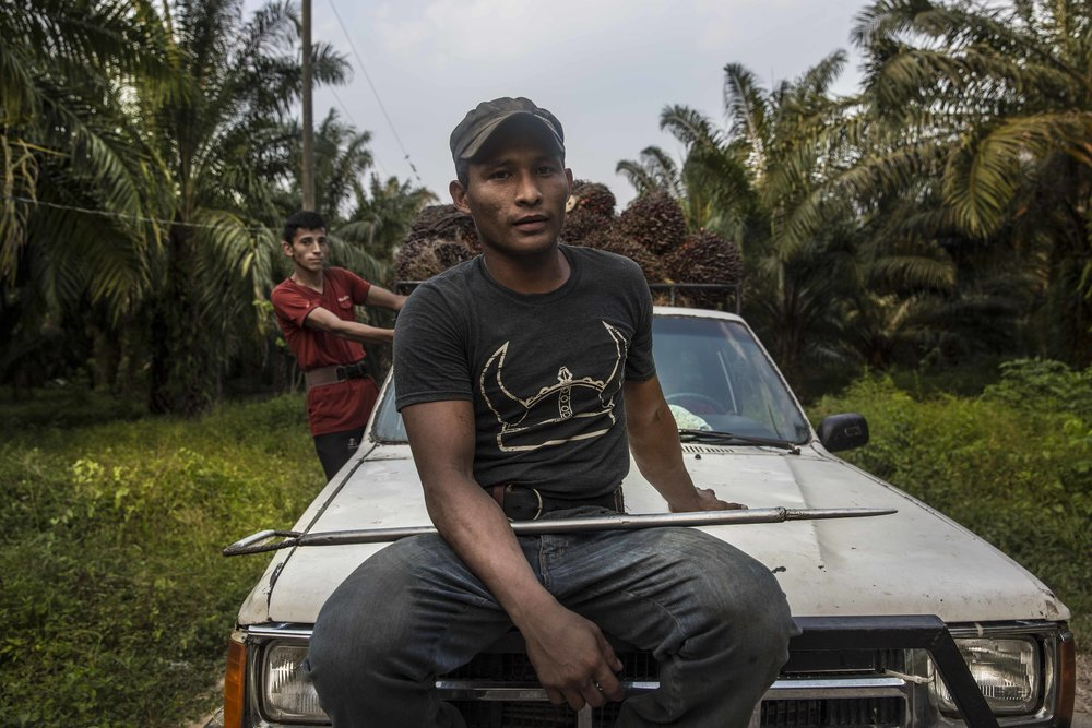 Peasants in the palm oil fields, outside the city of Tocoa in the department of Colon, on the Atlantic coast of Honduras. Around 3,000 peasants farmers in Honduras face criminal charges linked to land struggles.
