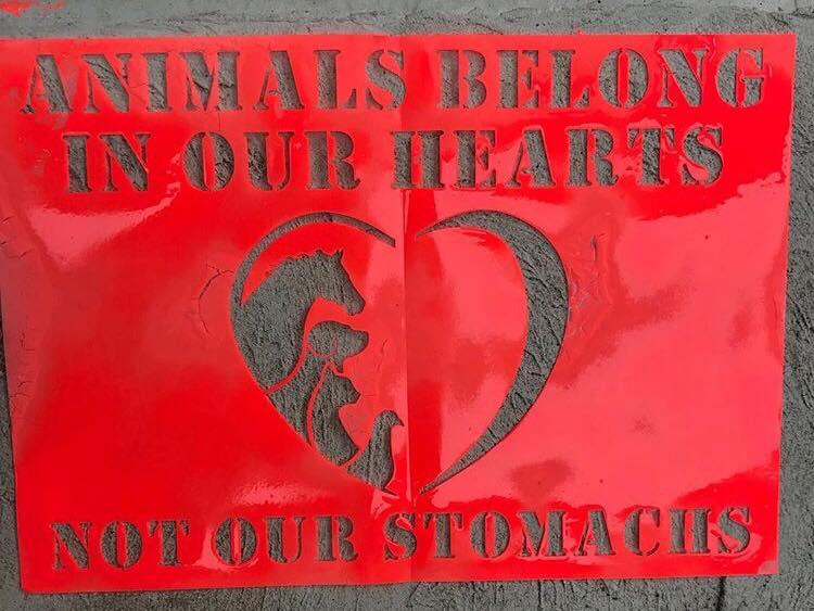 animals belong.jpg