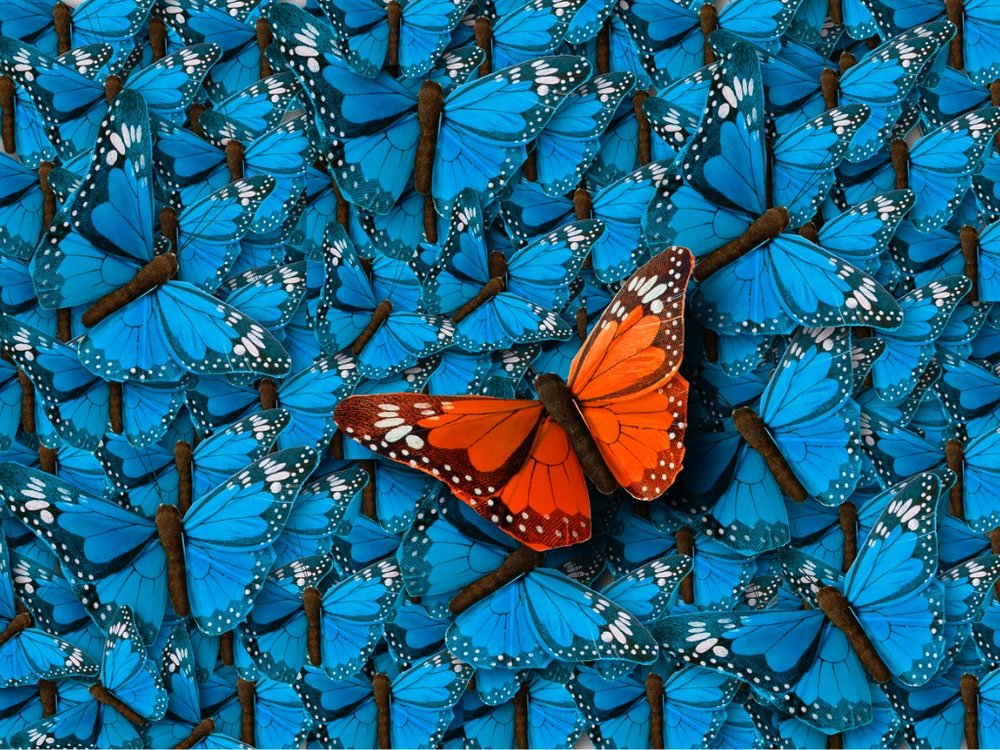 background-of-buterflies-picture-id804655092.jpg