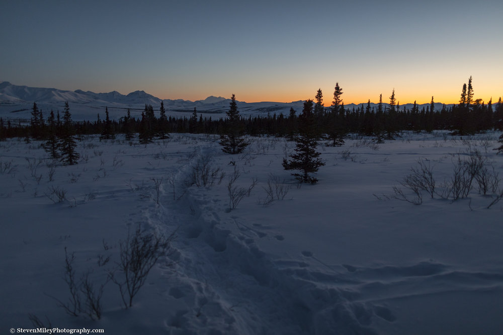 The snowshoe trail I followed under twilight.  The trail is pointing toward Denali.