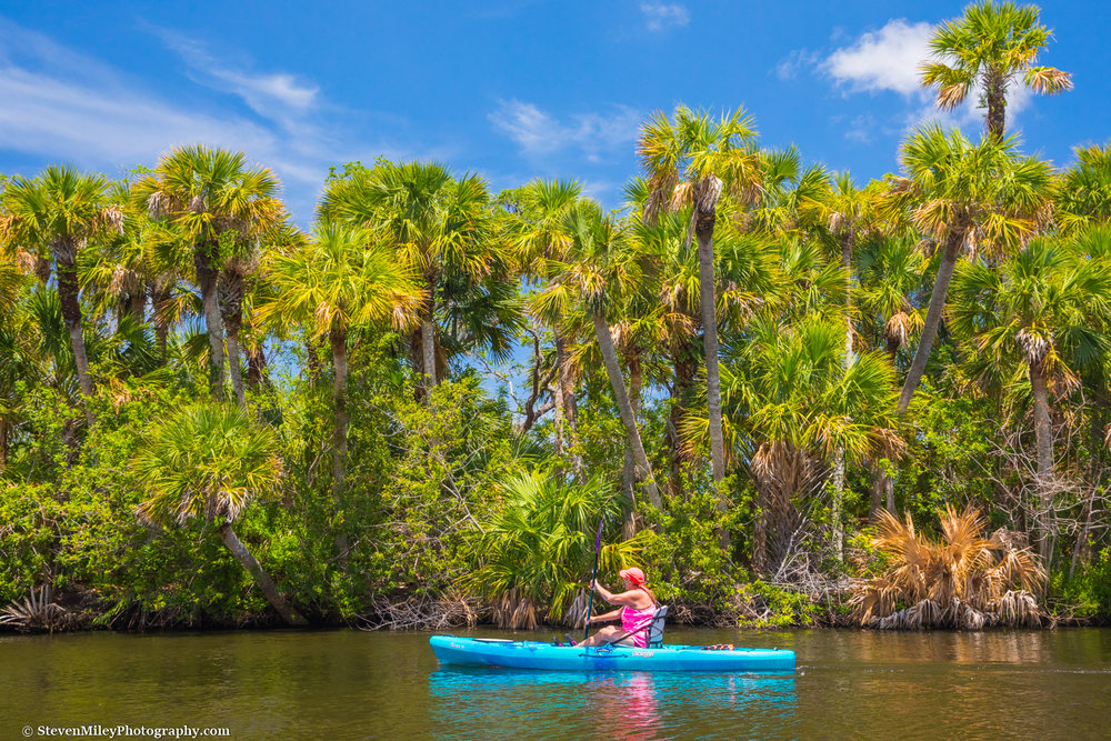 Kayaking past a cluster of sabal palms on the Sebastian River.