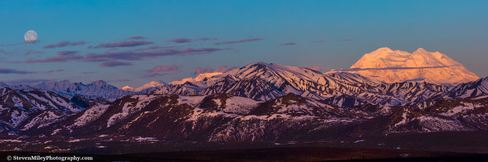 Sunrise on Denali with a waning gibbous moon floating nearby.
