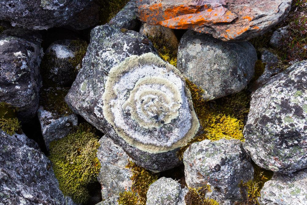 Lichen, Denali NP Backcountry