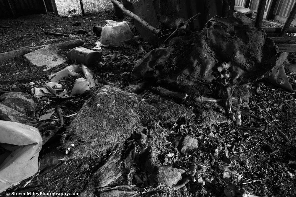 The head of this cow carcass in the barn seems a little too well preserved to be 30+ years old but I could be wrong. I didn't notice it among the debris until the bright white teeth caught my eye. There's a cow pasture across the street and I assume one got loose or perhaps was poached and this is where it ended up. The barns themselves are still in decent shape and the debris found in and around them suggest their owner worked studiously on the property.
