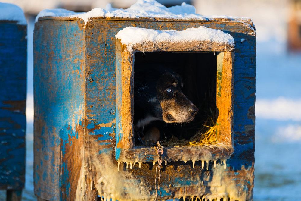 20 Below Doghouse Portrait