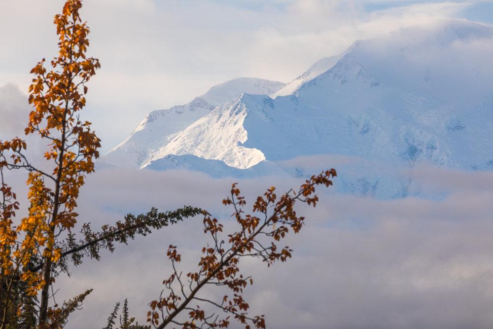 Denali Fall Morning