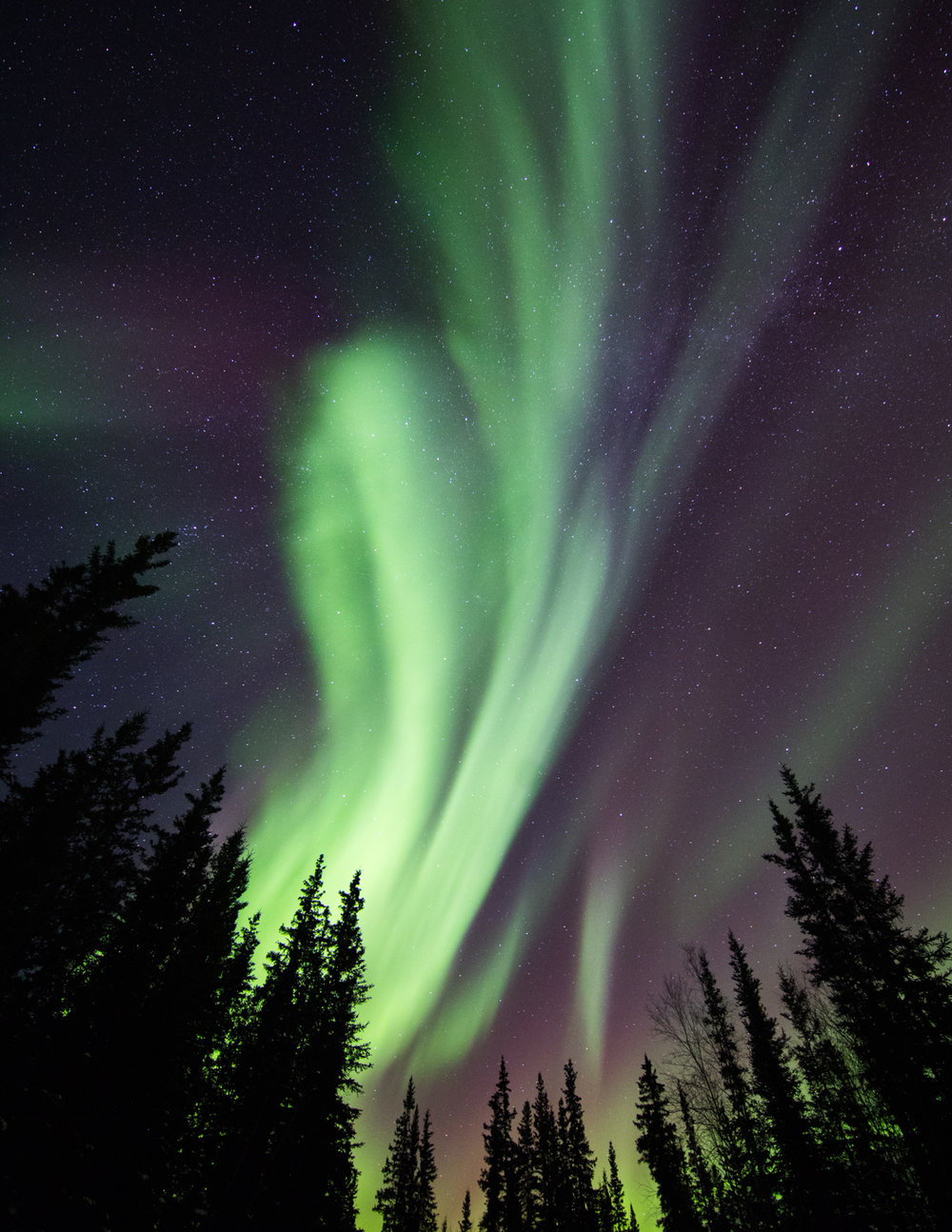 Vertical Aurora With Tree Silhouettes