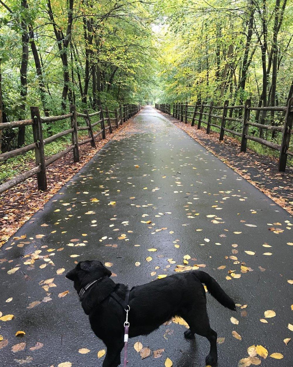 georgia fall walk 2018.jpg