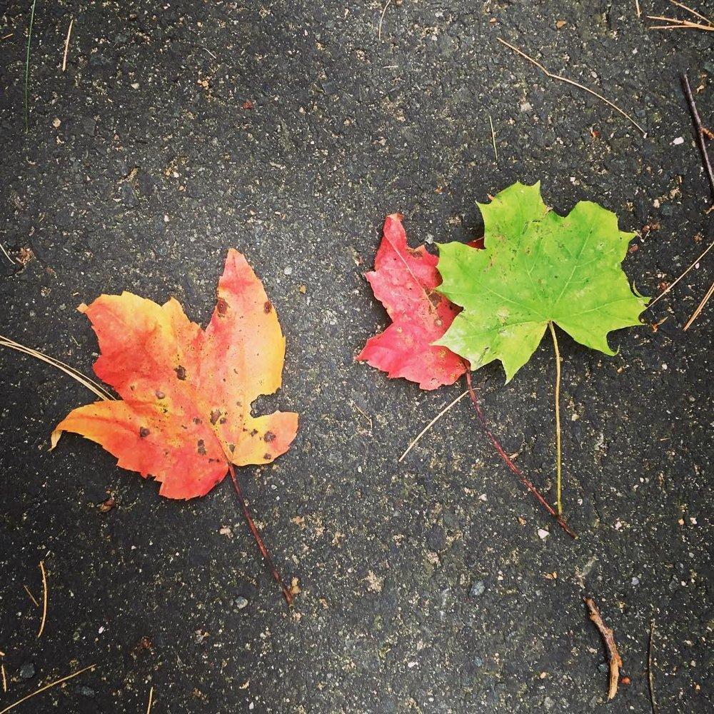 3 leafs.jpg