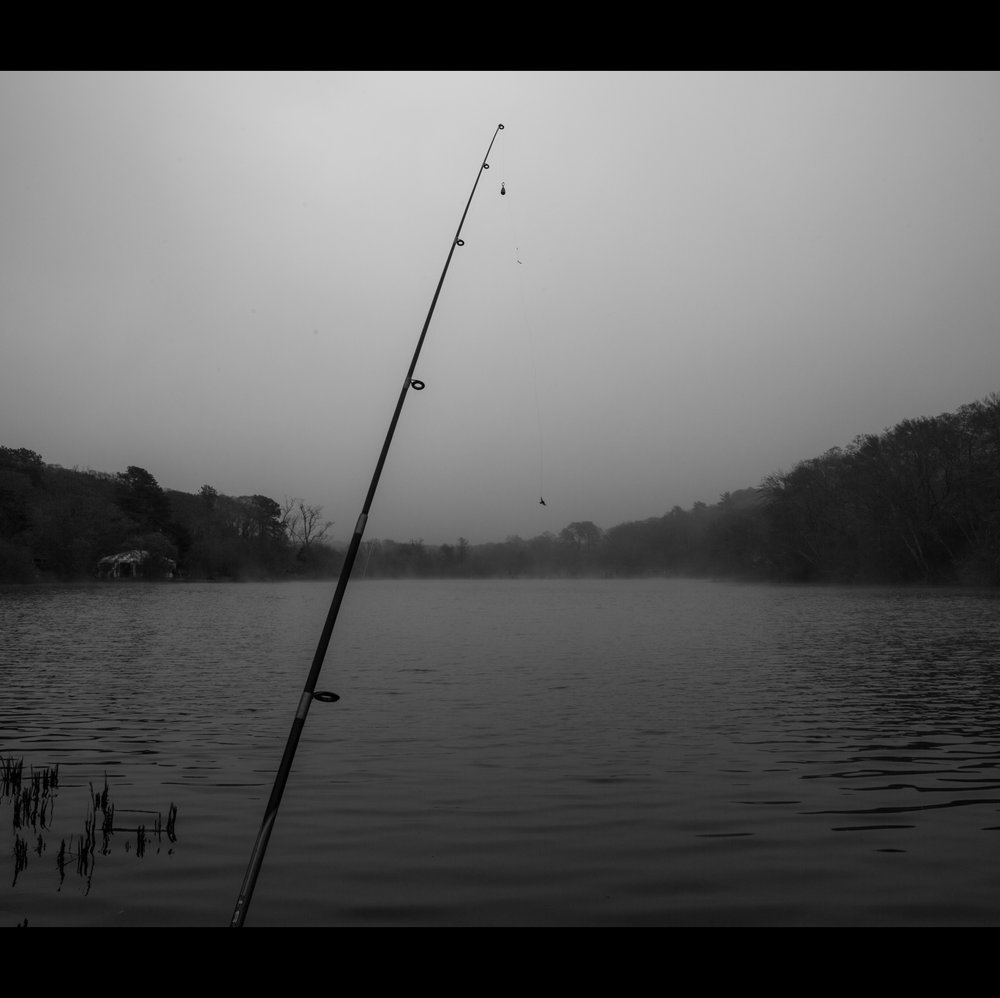 5.9 FOGGY FISH