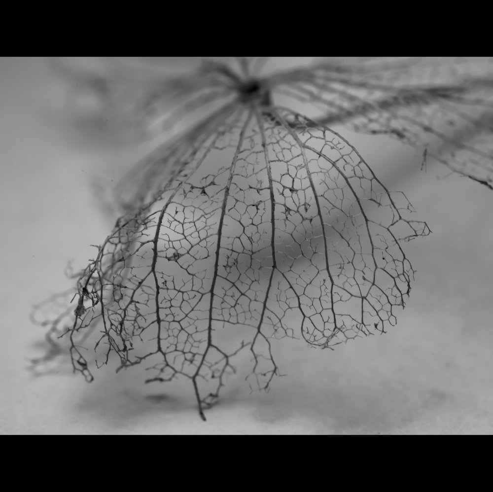 5.13 LEAF SKELETON