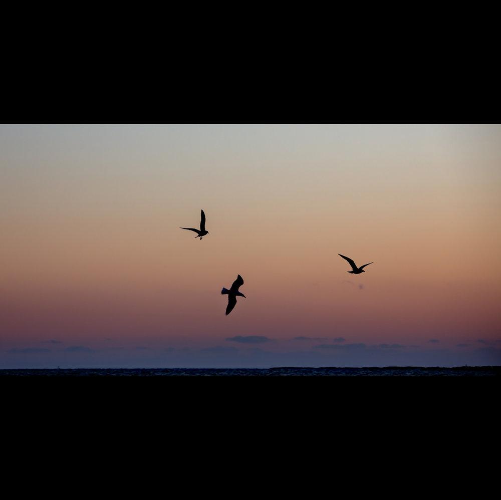 3.16.15 FULLER ST BIRDS