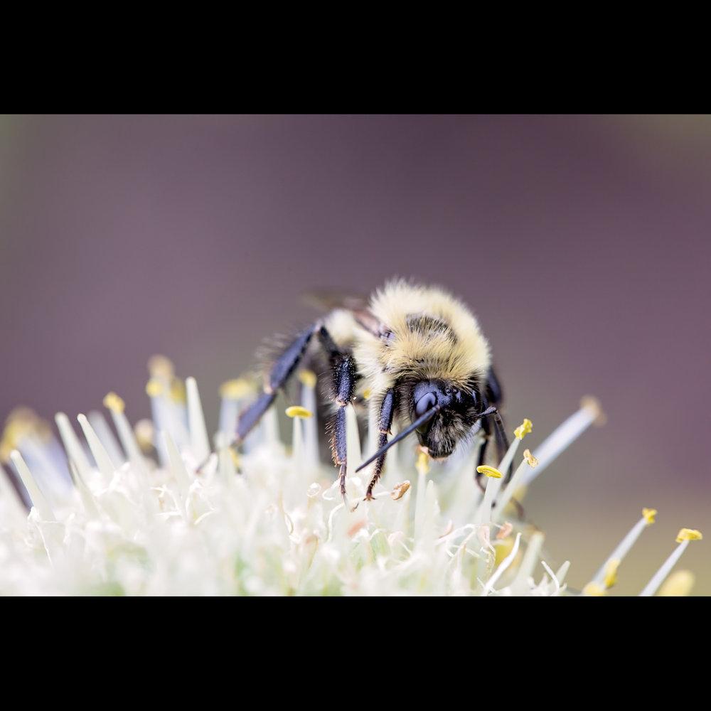 6.20 BEE MACRO