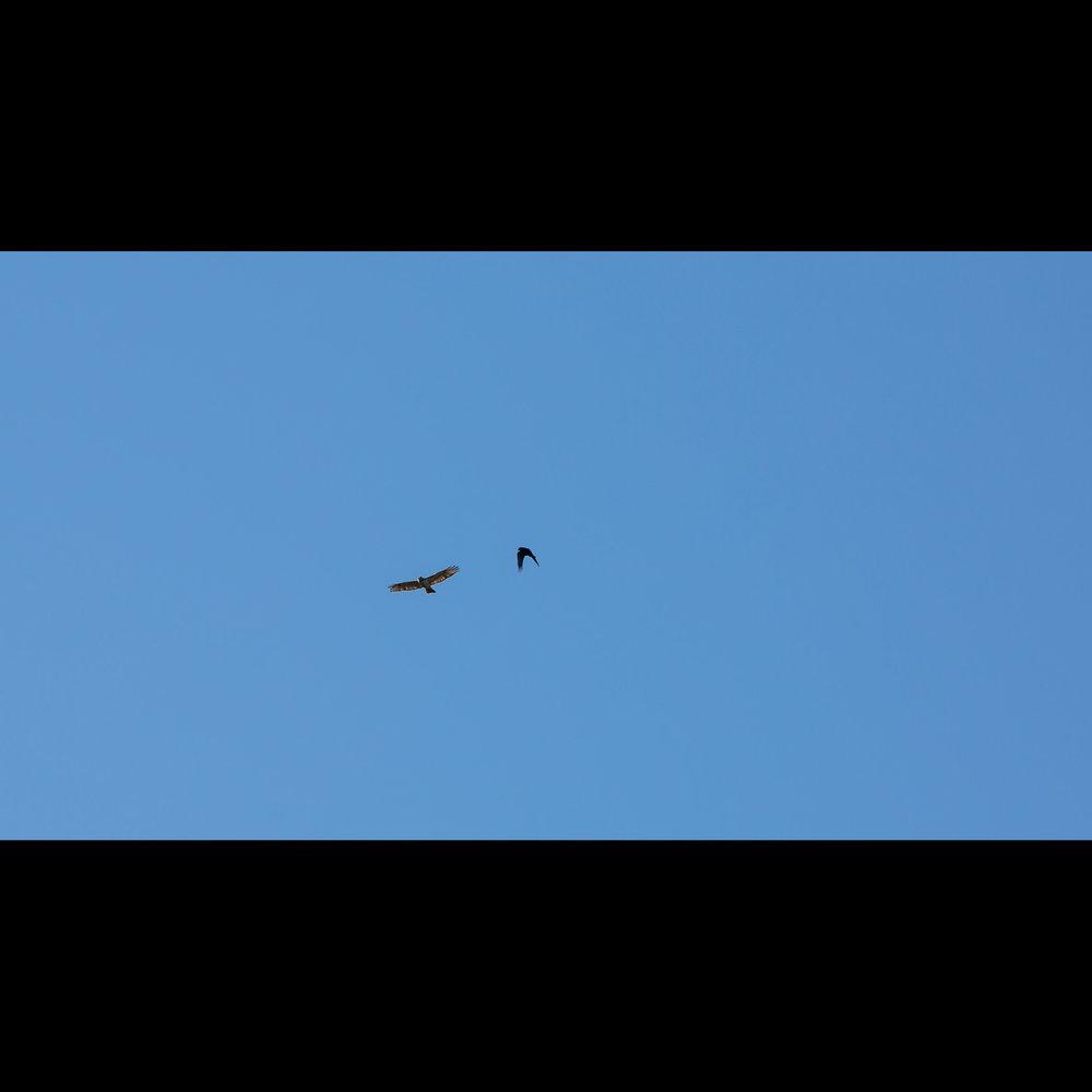 5.15 BIRD MOB