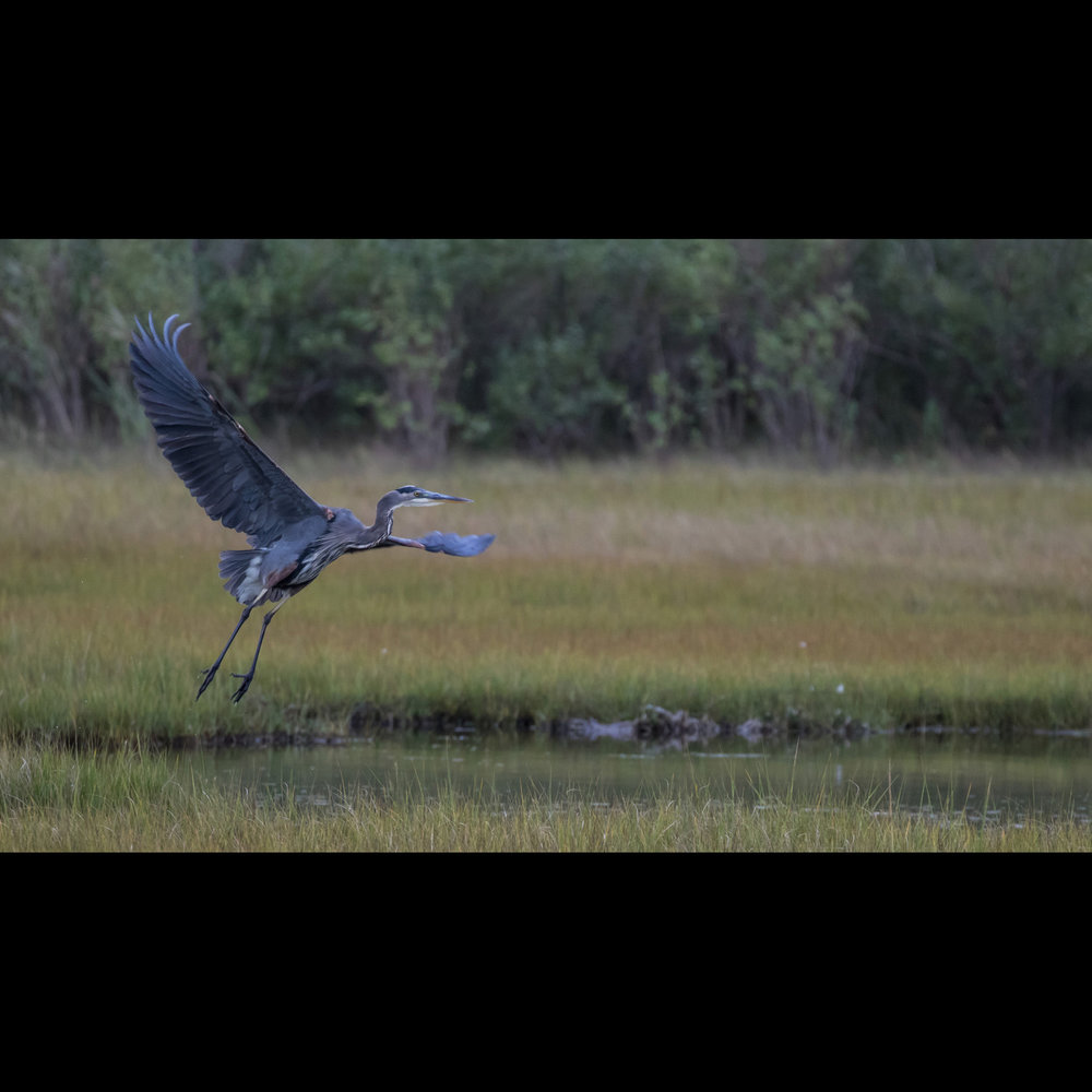 9.29 HERON TAKE OFF
