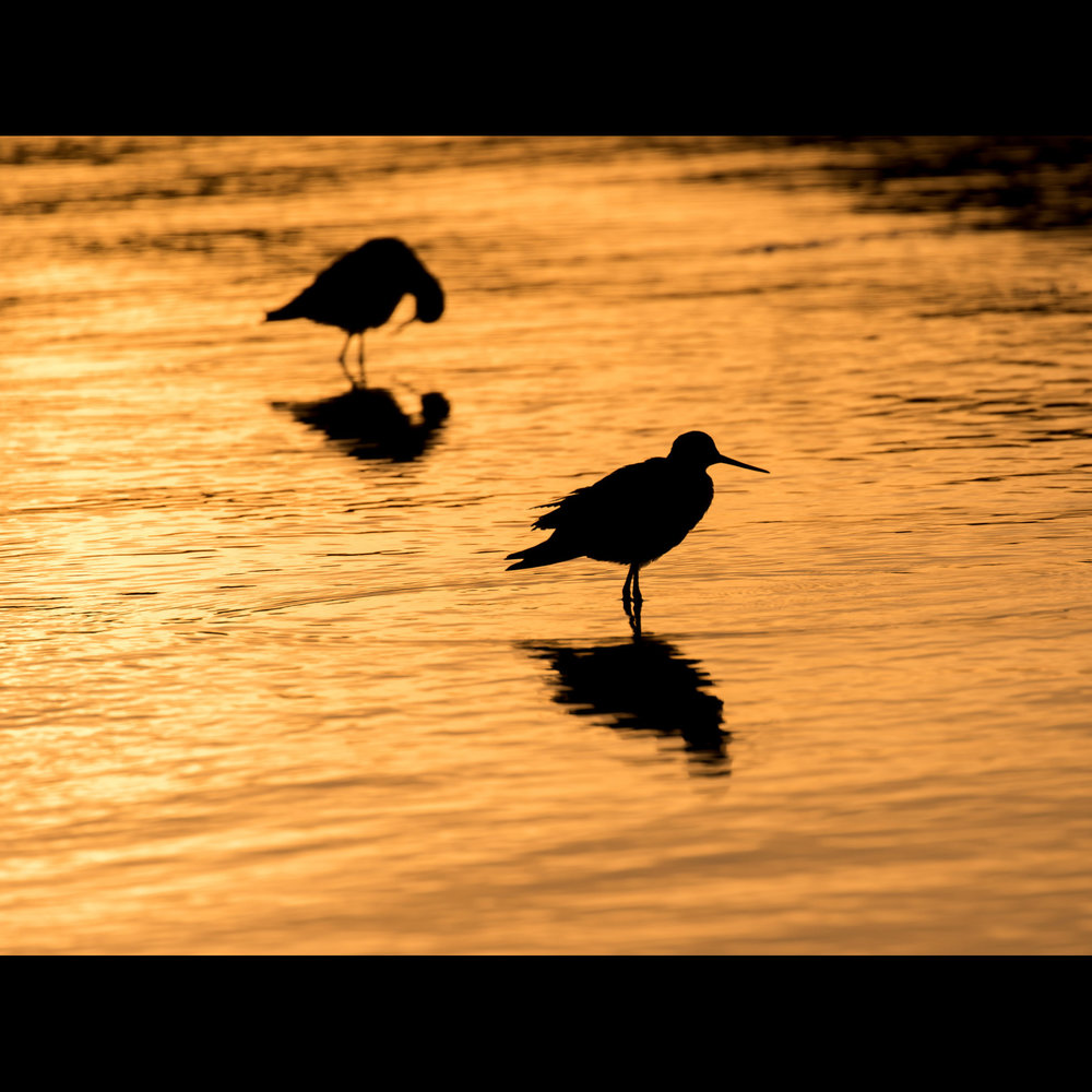 10.15 BIRDS AT SUNSET