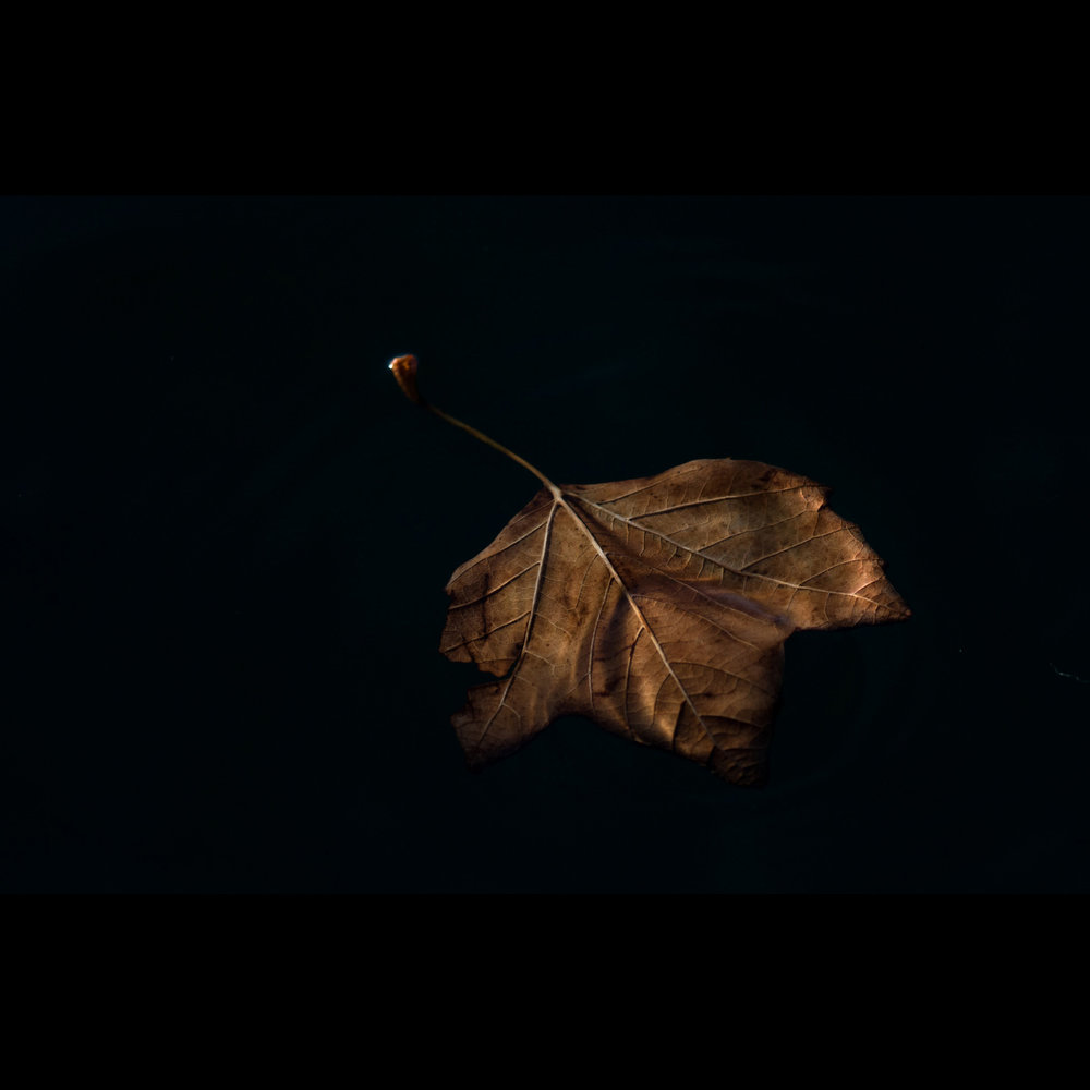 11.10 FLOATING LEAF