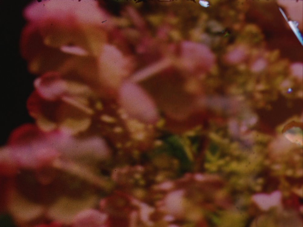 Moments from the Fall    Christina Hunt  2013 | 6 minutes | USA | 16mm | color | silent  The fall into a deep internal processing of one's past becomes a repetitive act on the verge of over analysis, revealing and breaking down layers. Submerged in the gravity of life changes one is pushed to step forward to a free fall.  Yielding control, sharing visions of a present experience, the journey becomes an aesthetic release from formality, a lightness of being. -CH