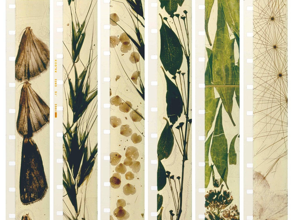 Stan Brakhage: Metaphors on Vision Presented in association with San Francisco Cinematheque & Canyon Cinema Foundation Friday, December 8th @ 7:30pm Yerba Buena Center for the Arts ▴ Light Industry's Thomas Beard in person ▴