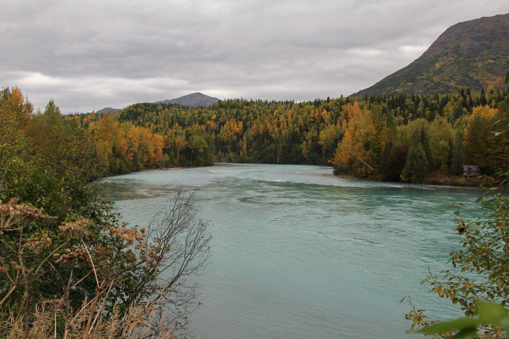 alaska river fall photography alyssa ackerman a place and all its creatures