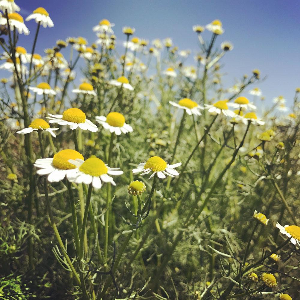Spring17f.jpg