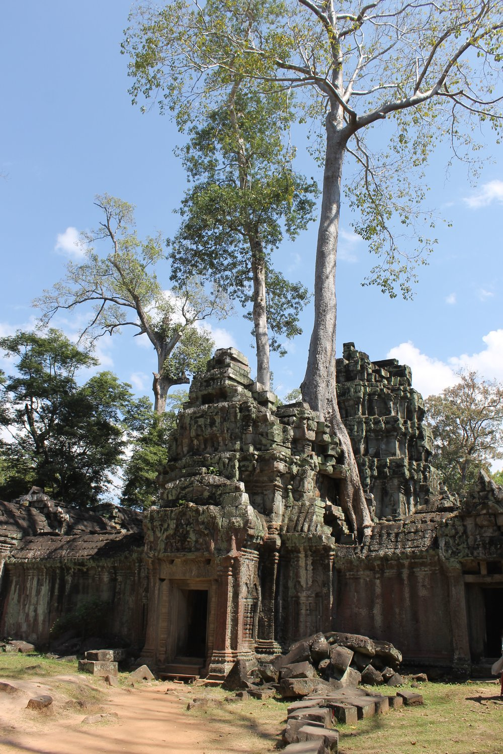 My favourite temple: Ta Prohm is overgrown with trees!