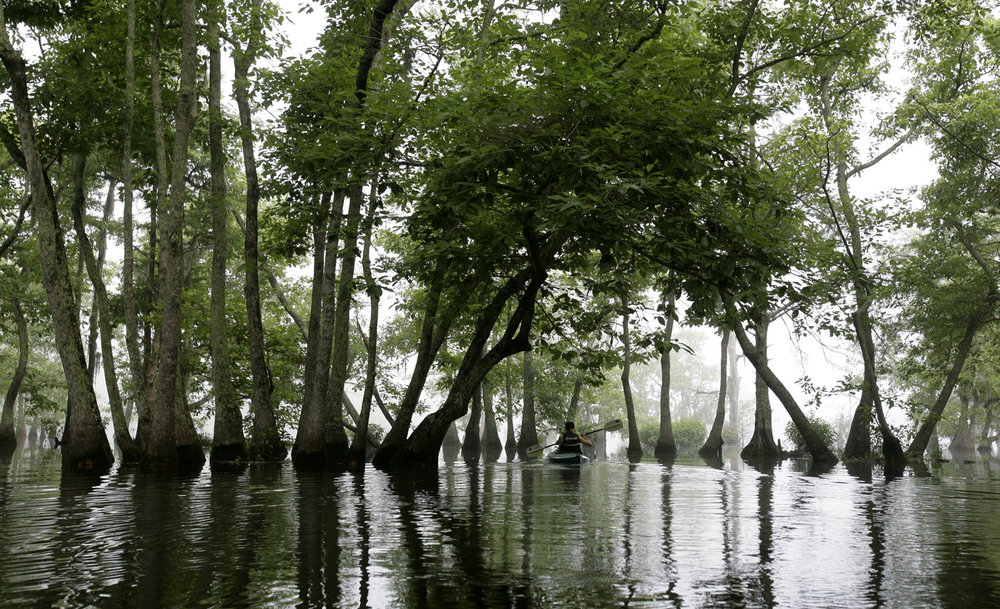 A kayaker paddles on Lake Chicot, Sunday, June 6, 2010, in Ville Platte, La. (Kevin Martin)