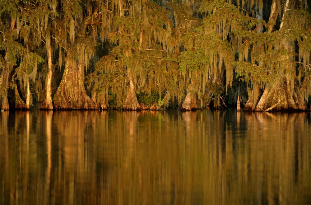 Cypress trees are reflected in Lake Martin at sunset on Sunday, August 22, 2010, near Breaux Bridge, La. (Kevin Martin)
